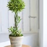 Topiary            5月サンプル作品            のイメージ